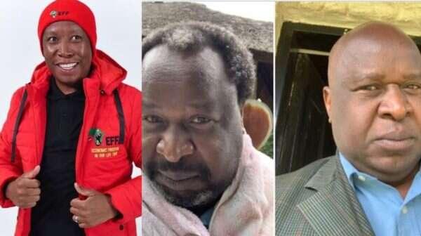 Julius Malema pokes fun at Tito Mboweni's bald head